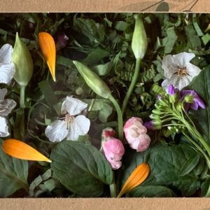 Tampopo : bento nouilles fraîches aux plantes sauvages