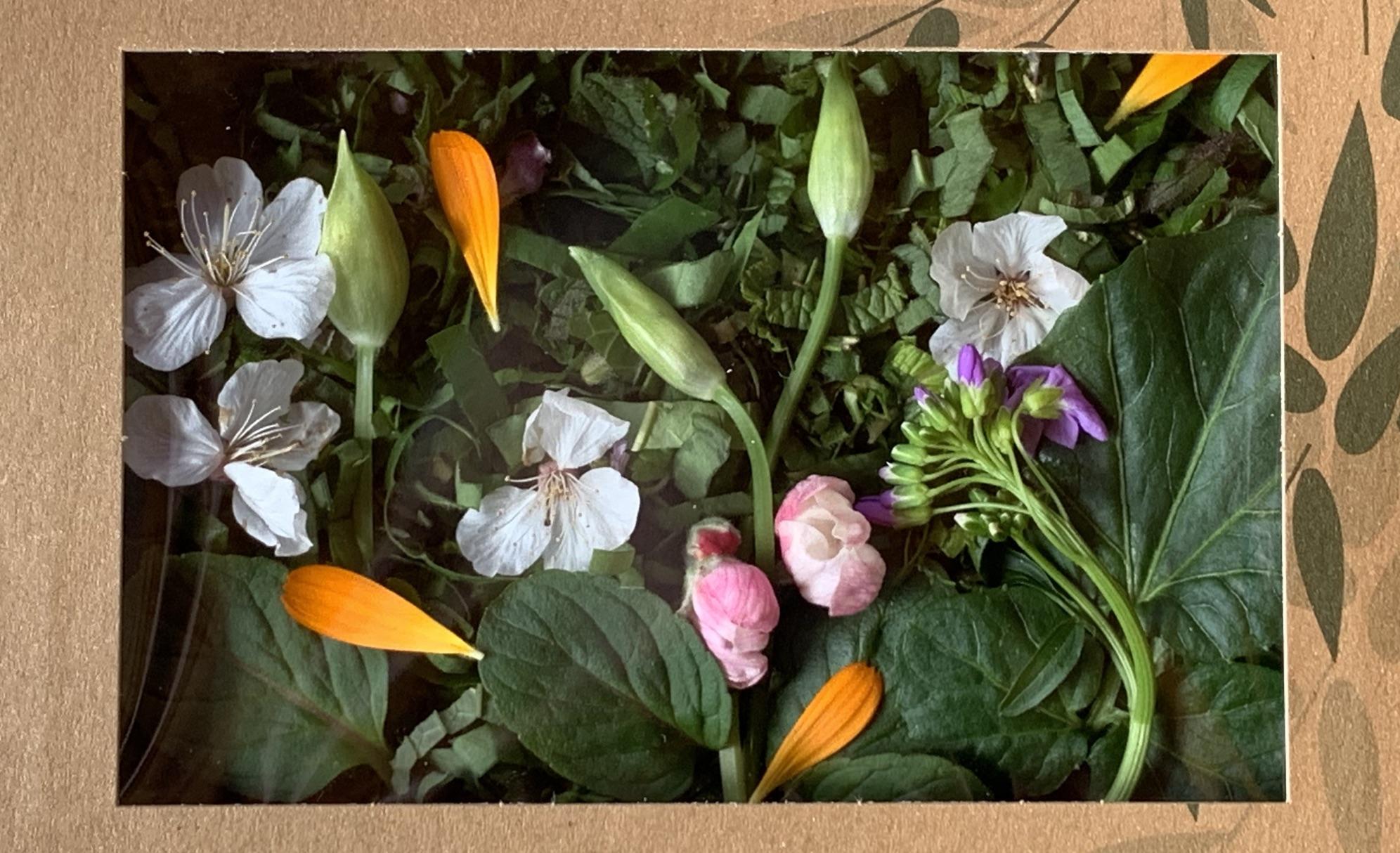 Bento «nouilles fraîches aux plantes sauvages» : composition lot par lot