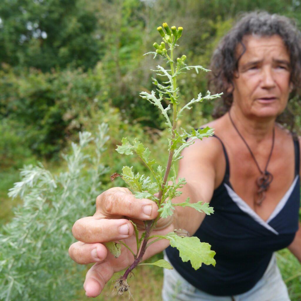 Monique Forestié présente toutes ses plantes, au fil des saisons